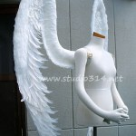 wing060-s