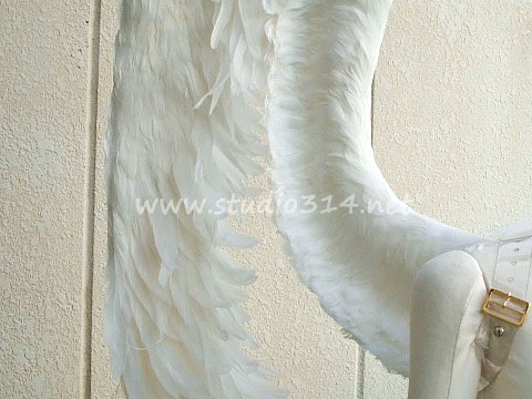 wing062-up