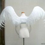 wing069-b