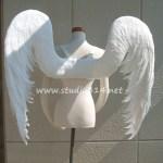 wing079-b