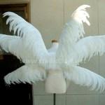 wing084-b
