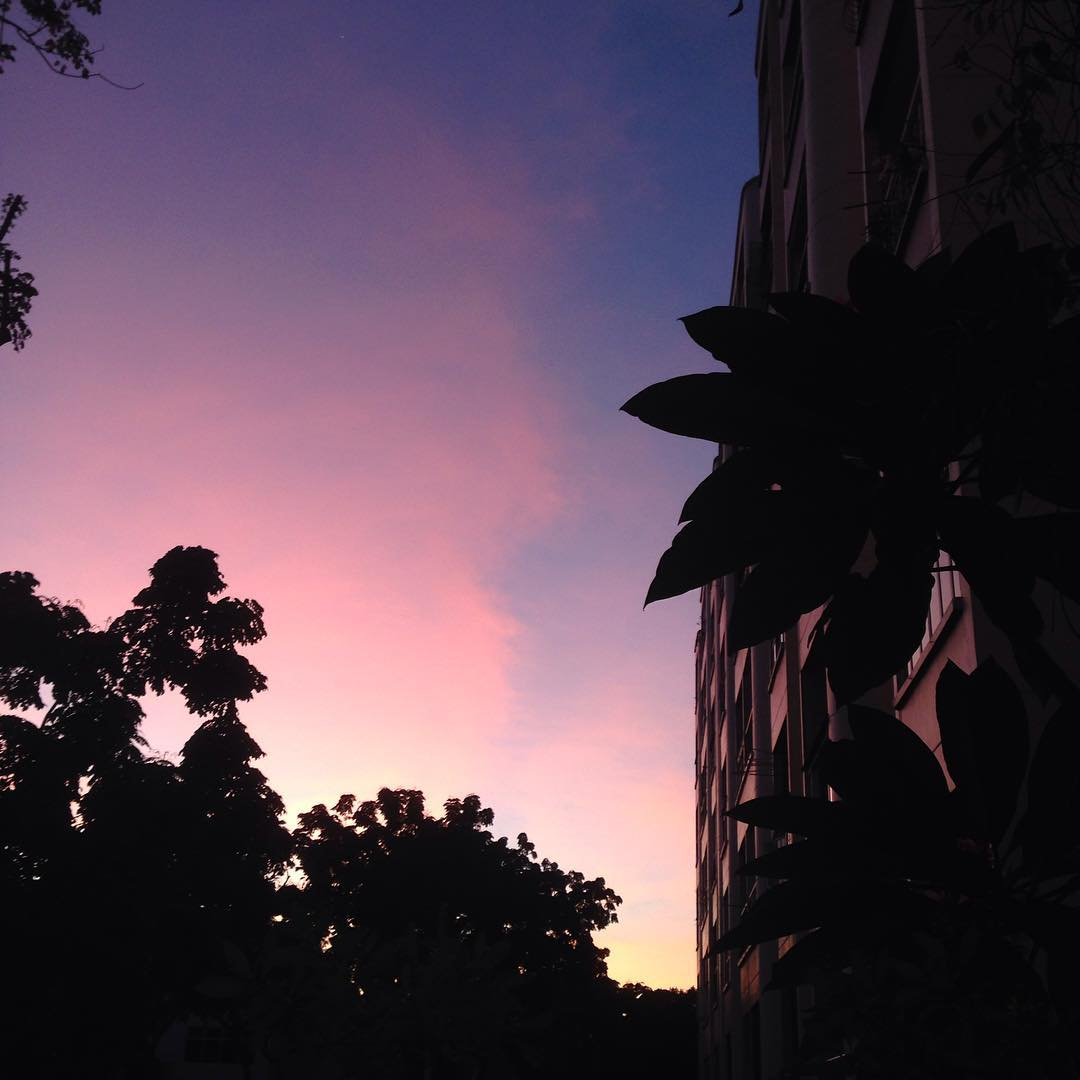 And then I looked up  There in its still gentleness  Your glory in pink • #haiku #sunset #singapore #glory #beauty #pink #nature #nofilter #studioasobi