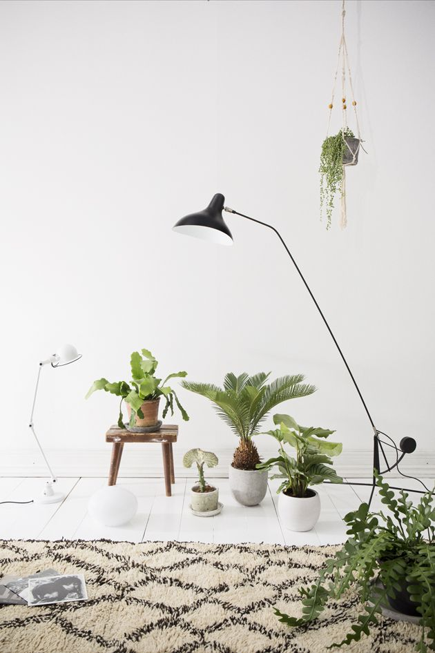 Ikea House Plants Plants In The Home On Pinterest - Cate St Hill