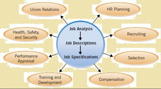 Job Analysis Definition, Process  Methods \u2013 StudiousGuy - job analysis