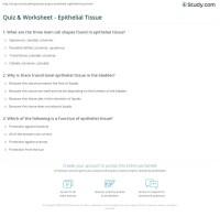 Tissue Worksheet Answer Key Anatomy - Kidz Activities