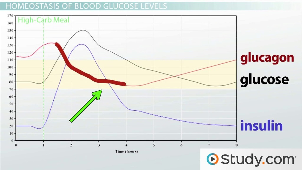 Homeostasis of Glucose Levels Hormonal Control and Diabetes - Video