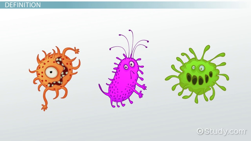 Types of Protist Reproduction - Video  Lesson Transcript Study - protista examples