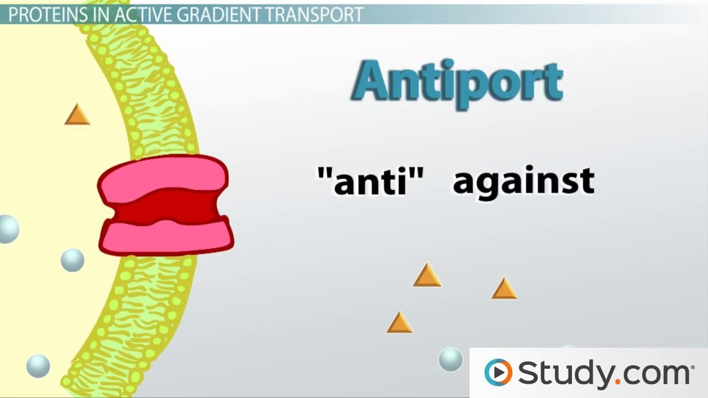Active Transport in Cells Definition  Examples - Video  Lesson