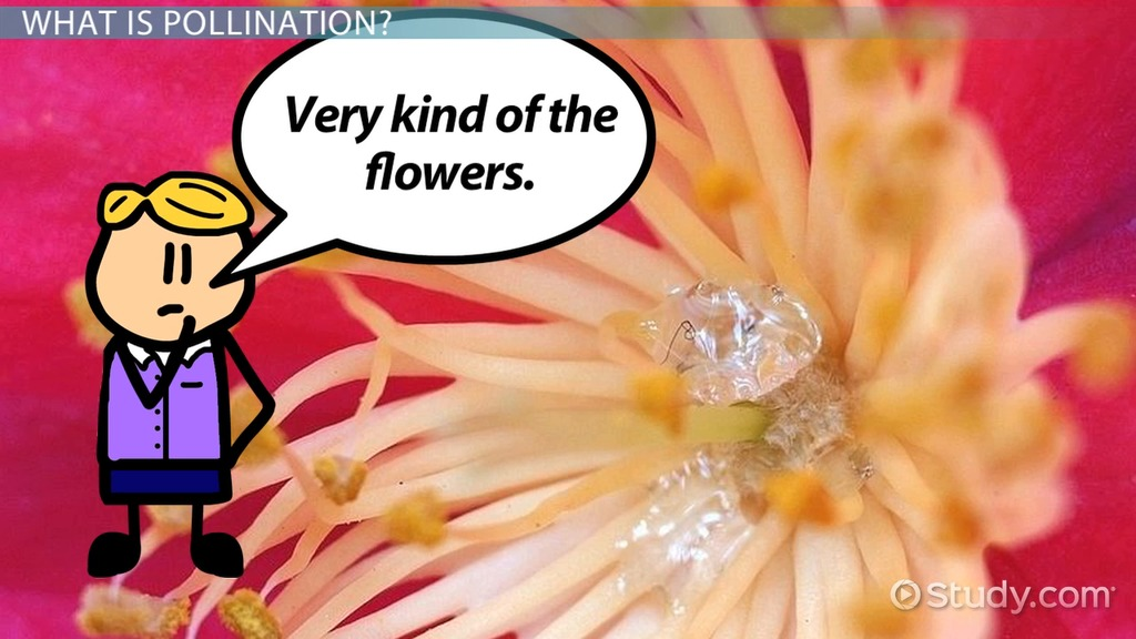 Pollination Process Male  Female Flower Components - Video