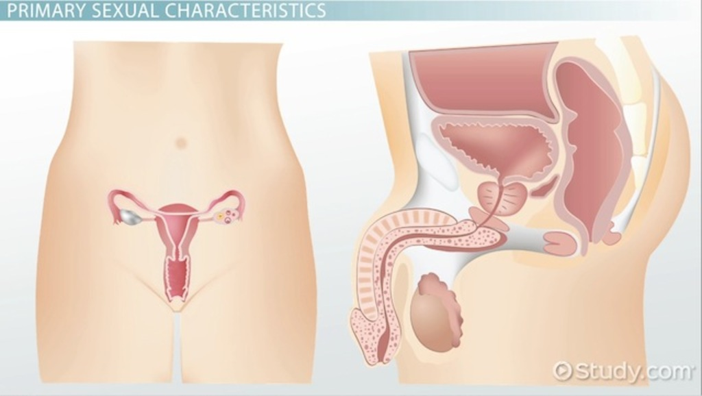 men taking female hormones effects