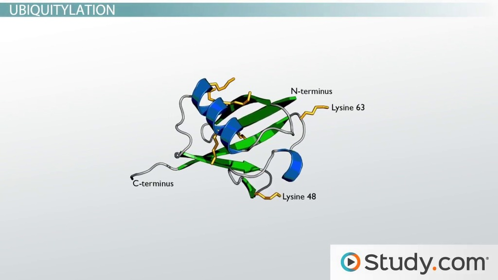 Post translational Modifications of Proteins - Video  Lesson