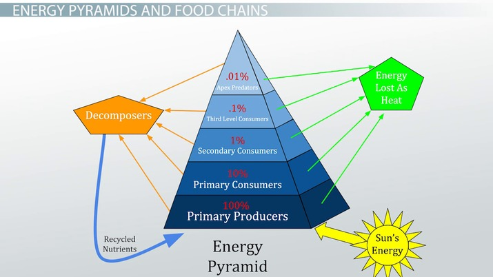 The 10 Energy Rule in a Food Chain - Video  Lesson Transcript