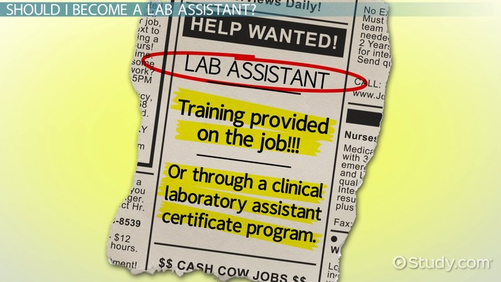 How to Become a Lab Assistant Step-by-Step Career Guide