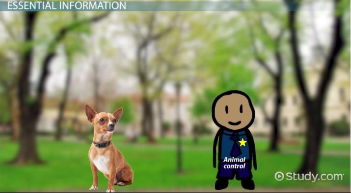 Animal Control Officer Job Description and Career Requirements