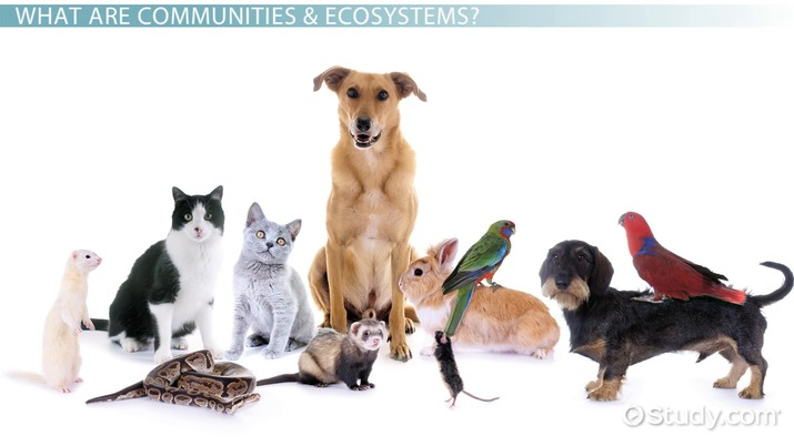 Difference Between a Community and an Ecosystem - Video  Lesson