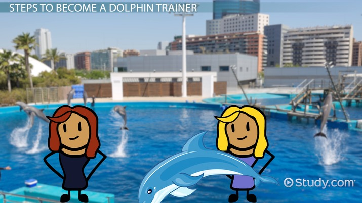 How to Become a Dolphin Trainer Step-by-Step Career Guide