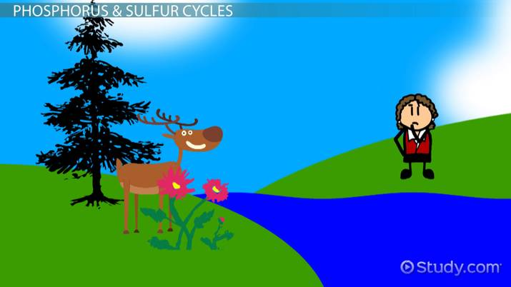 What is the Nutrient Cycle? - Definition  Steps - Video  Lesson