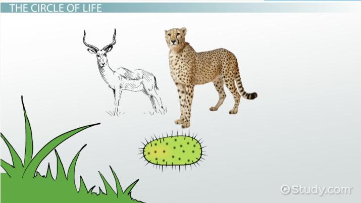 Producers, Consumers  Decomposers in Ecosystems - Video  Lesson