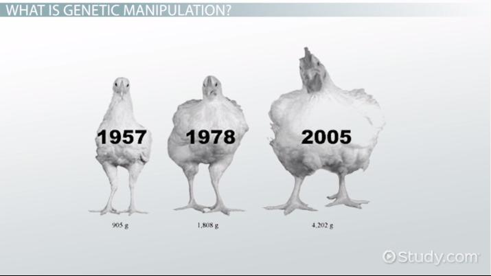 Genetic Manipulation Definition, Pros  Cons - Video  Lesson