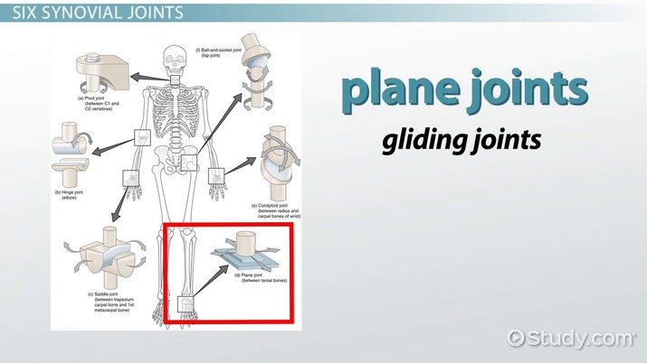 The Six Types of Synovial Joints Examples  Definition - Video