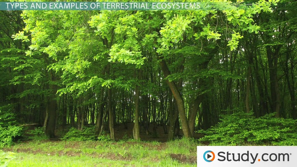 What is a Terrestrial Ecosystem? - Definition, Examples  Types