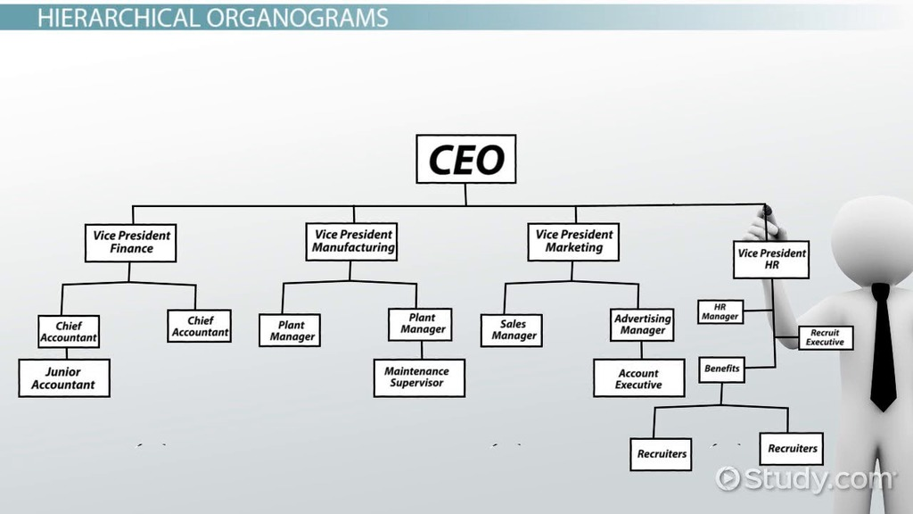 What is an Organogram? - Definition, Structure  Example - Video - how to organize chart examples