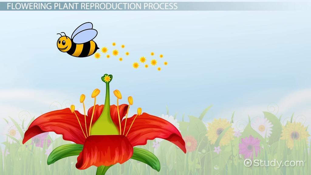 Plant Reproduction Lesson for Kids - Video  Lesson Transcript