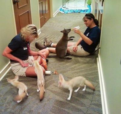20 Reasons Zookeepers Have the Best Job in the World!