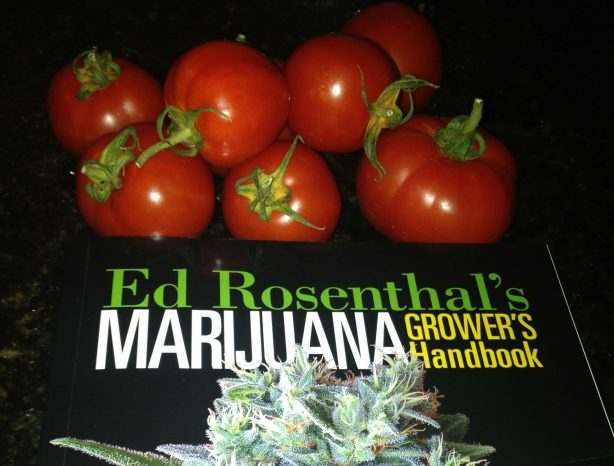 Ed Rosenthal says Legalize Marijuana. Then Treat It Like Tomatoes.