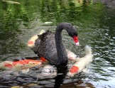 hyatt-regency-maui-resort-and-spa-review-14