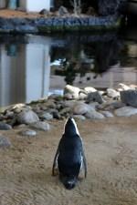 hyatt-regency-maui-resort-and-spa-review-18