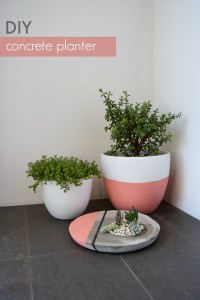 DIY Large Concrete Planter  STYLE CURATOR