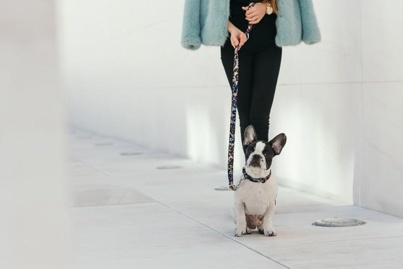 brott-barcelona-charlie-the-dog-french-bulldog-styleinlima-BROTT-FW2015-QuerolM