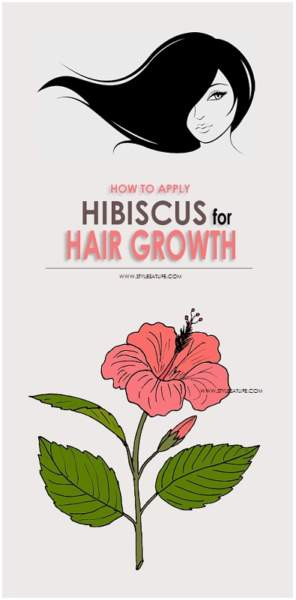 Hibiscus Flower Benefits For Hair How To Use Hibiscus For Hair Growth? | Styles At Life