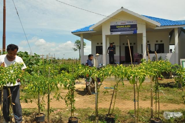 suara jakarta Banjir Cabe di Saung Ilmu Desa Gemilang