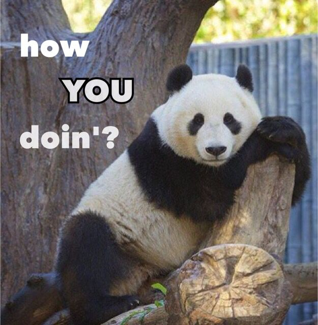 Animal Man Wallpaper 40 Funniest Pictures Of Panda Bears On The Internet Right