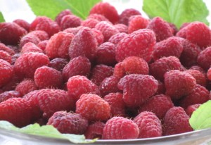 Fresh Raspberry Crop