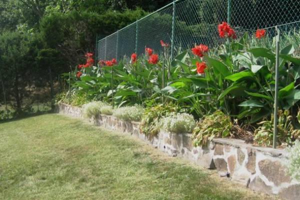 back-yard-canna-lilies-step-1-close-up