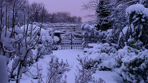 Falling Snow Live Wallpaper For Iphone Suburban Turmoil