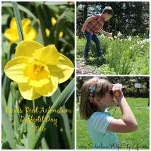 Daffodil Day at Reeves-Reed Arboretum 2016