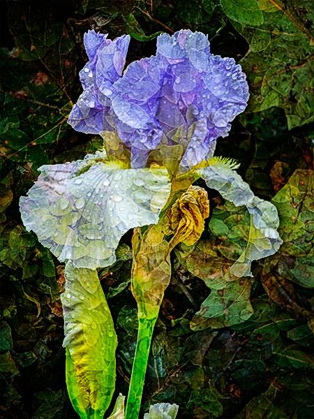 iris art image