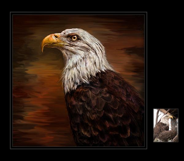 eagle by bob coates