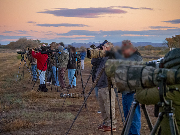 photographers at bosque del apache