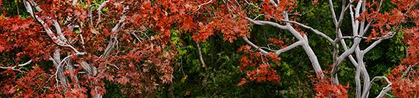 red butte arboretum salt lake city