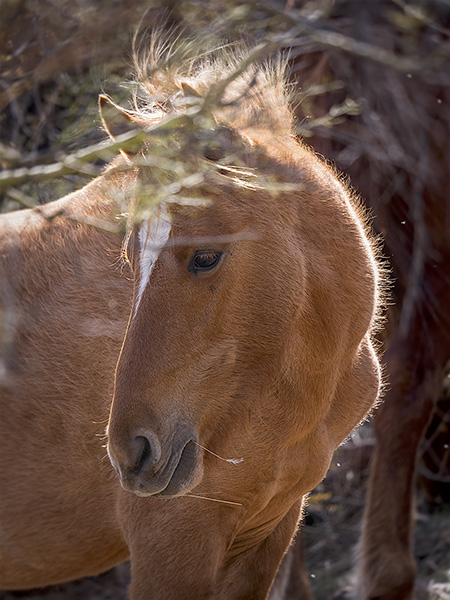 bob coates photography salt river horse