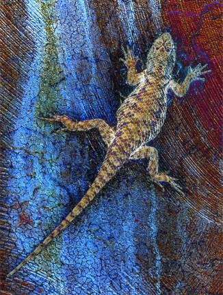 climbing lizard image bob coates photography