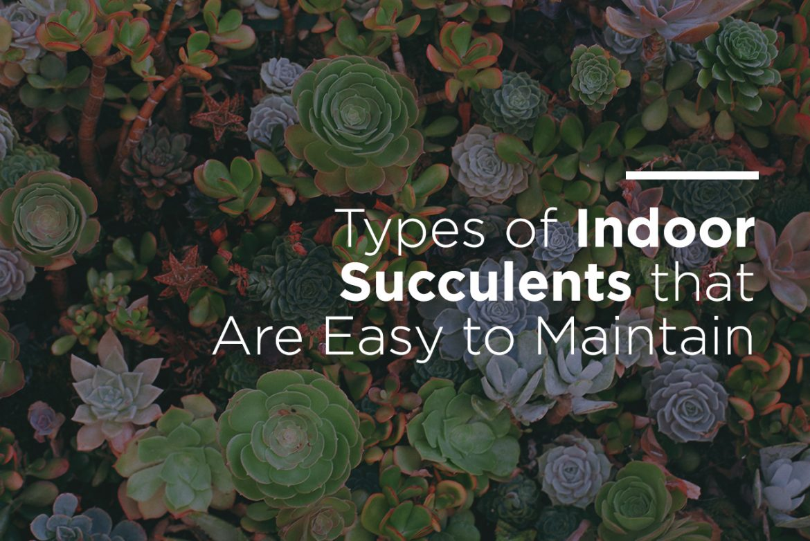 Indoor Plant Types Types Of Indoor Succulents That Are Easy To Maintain