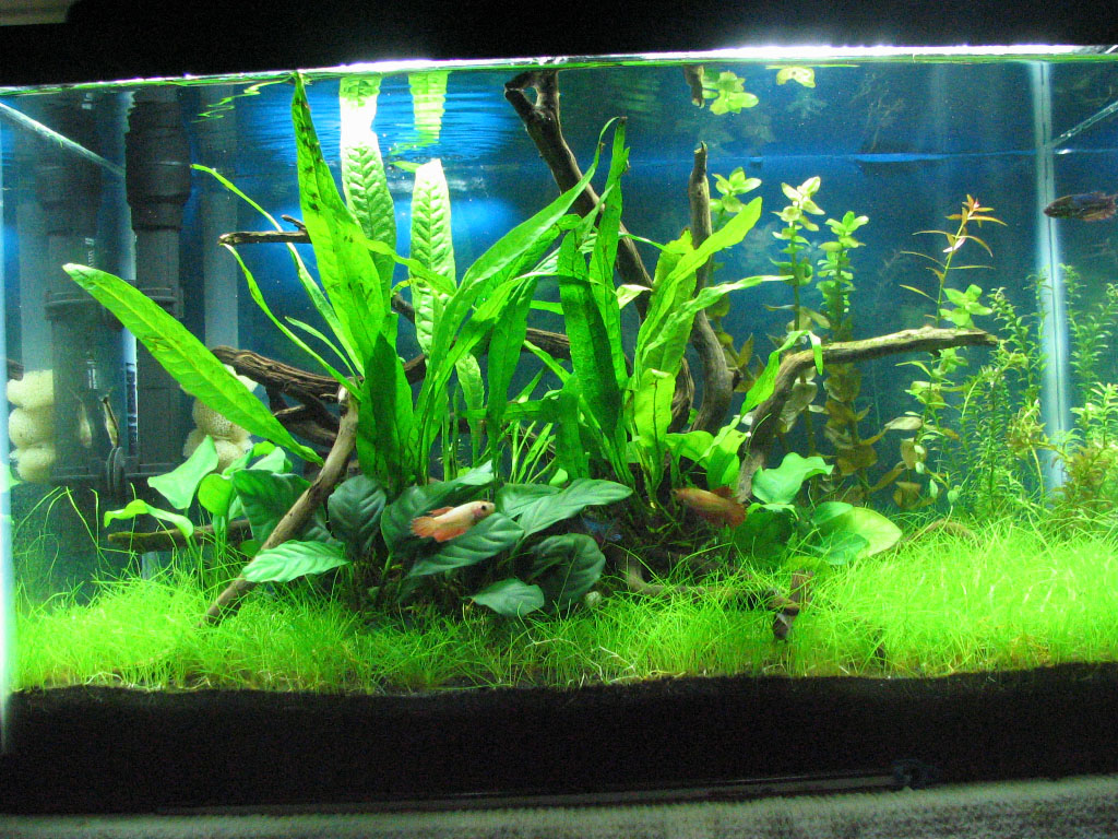 Aquarium Bottom Light Aquarium Bottom Light Dwarf Baby Tears With Aquarium