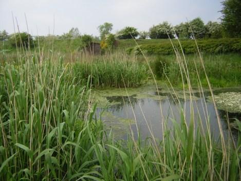 Humedal para tratamiento de agua. Fuente University of Edinburgh