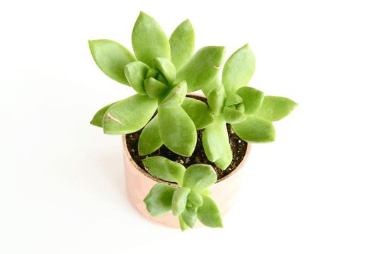 DIY mini copper planters by Sugar & Cloth for Poppytalk